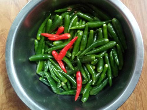 阳台种辣椒